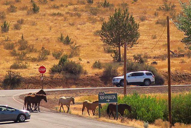 Horses returning after eclipse.jpg