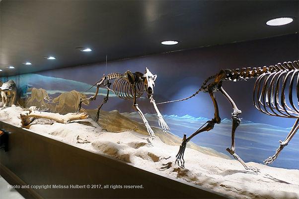 Dire Woilf Fossils-La Brea Tar Pits-LA-U