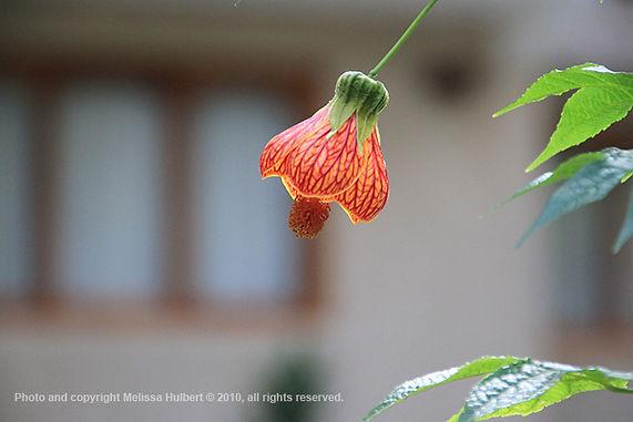 Flower-Machu Picchu-Peru-w.jpg