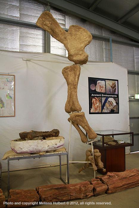 Age of Dinosaurs Museum-Winton-2-w.jpg