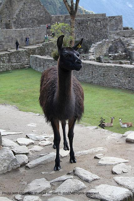 Machu Picchu-Peru-2-w.jpg
