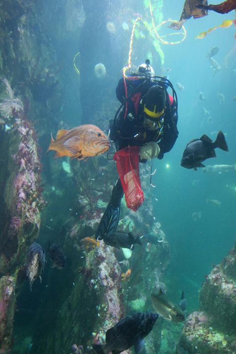 Seattle Aquarium-1.jpg