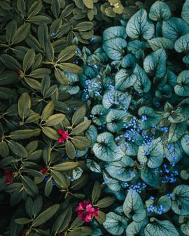 Looduse värvid