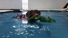 Hydroptherapy