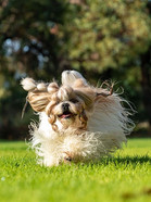 See your dog fly!
