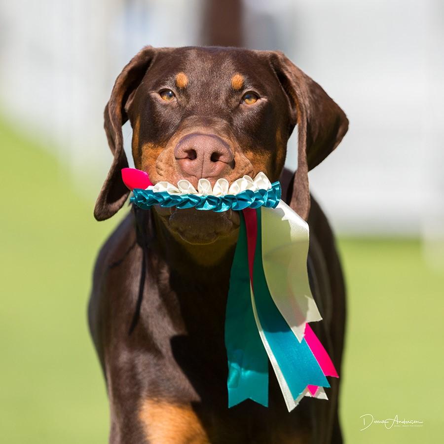 Runner Up Best of Breed
