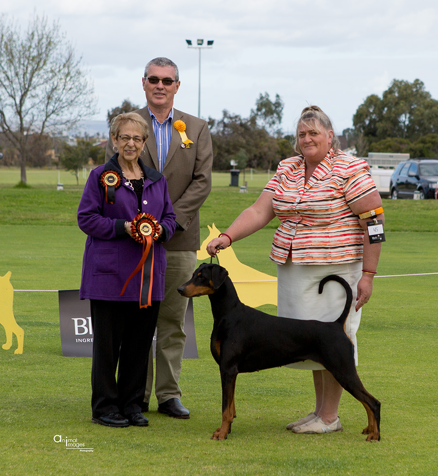 State Bred in Show