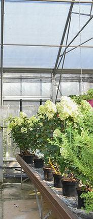 Garden vivai Lugo Verona
