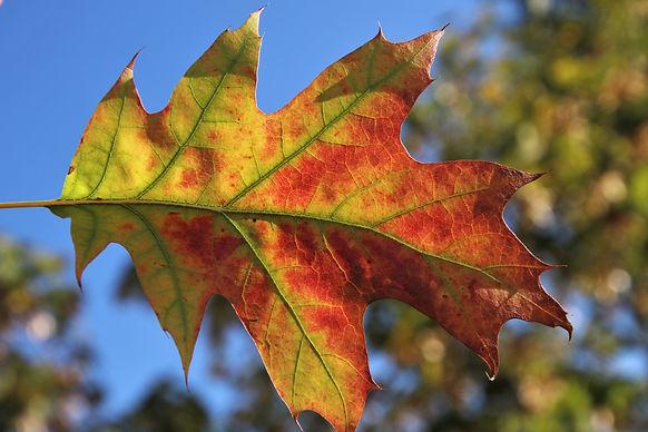 leaf-3724583_1920.jpg