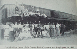 Archived - Candor Fruit Company 1910