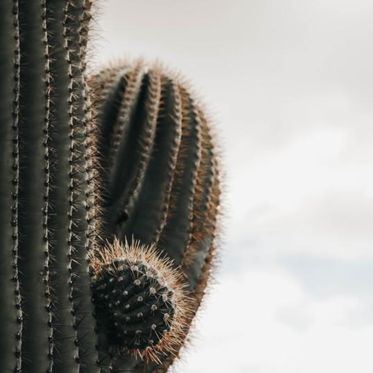 Ilume Scottsdale   Cactus