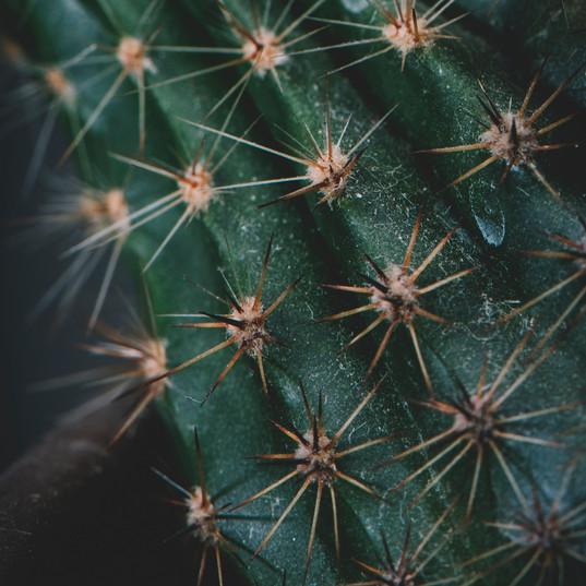 Ilume Scottsdale | Cactus 2