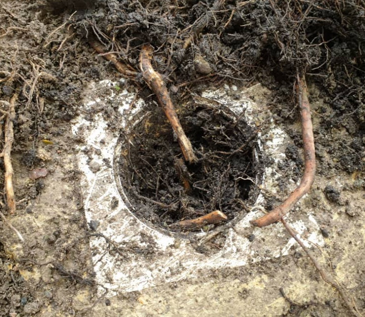 Storm drain clogged with roots