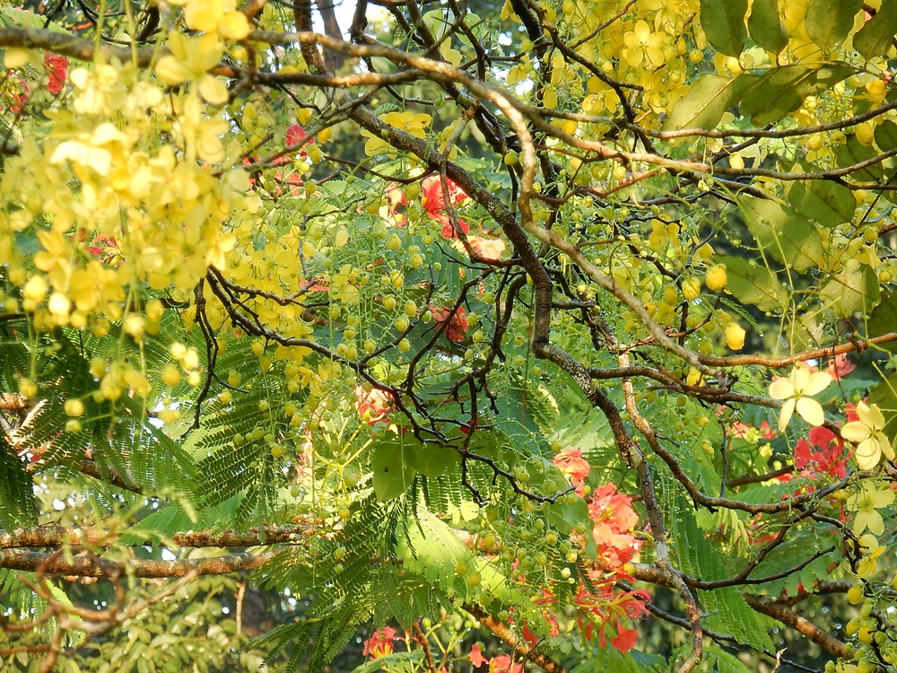 Trees in flower at Lake Park