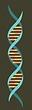 ADN VERTIC.png