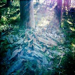 Even Trees Are Shredding Their Skin