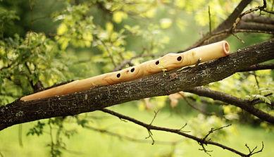 Flute_tree_1.jpg