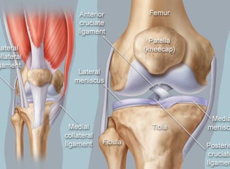 Detailed Anatomy of the Knee Joint