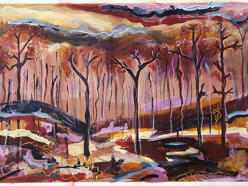 Pilliga Forest After Fires - Print