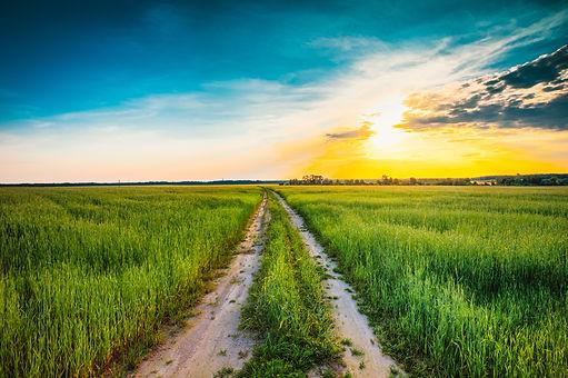 Sunset over rural road in green field.jpg