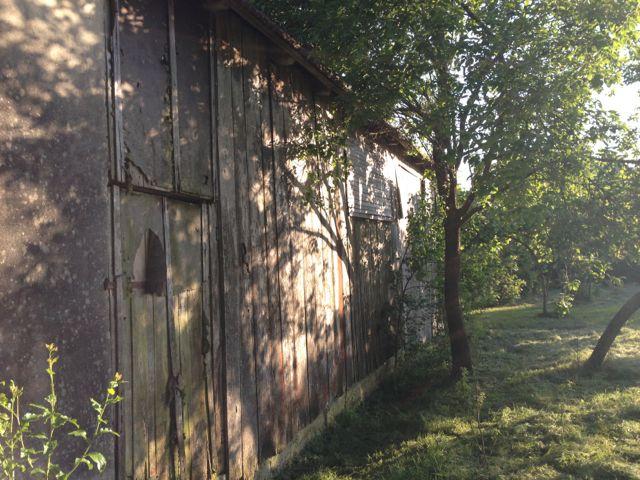 Beautiful tree shadows on barn side
