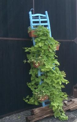 Vintage Ladder hanging plant display