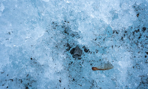 Ahornsamen Gletscher