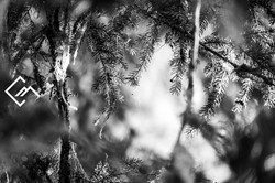 Wald_Vals_a7m3_190827_00005_web_©Markus