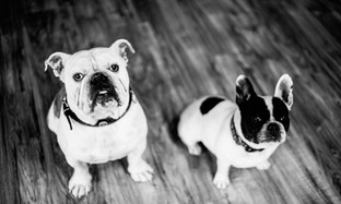 Dogs I