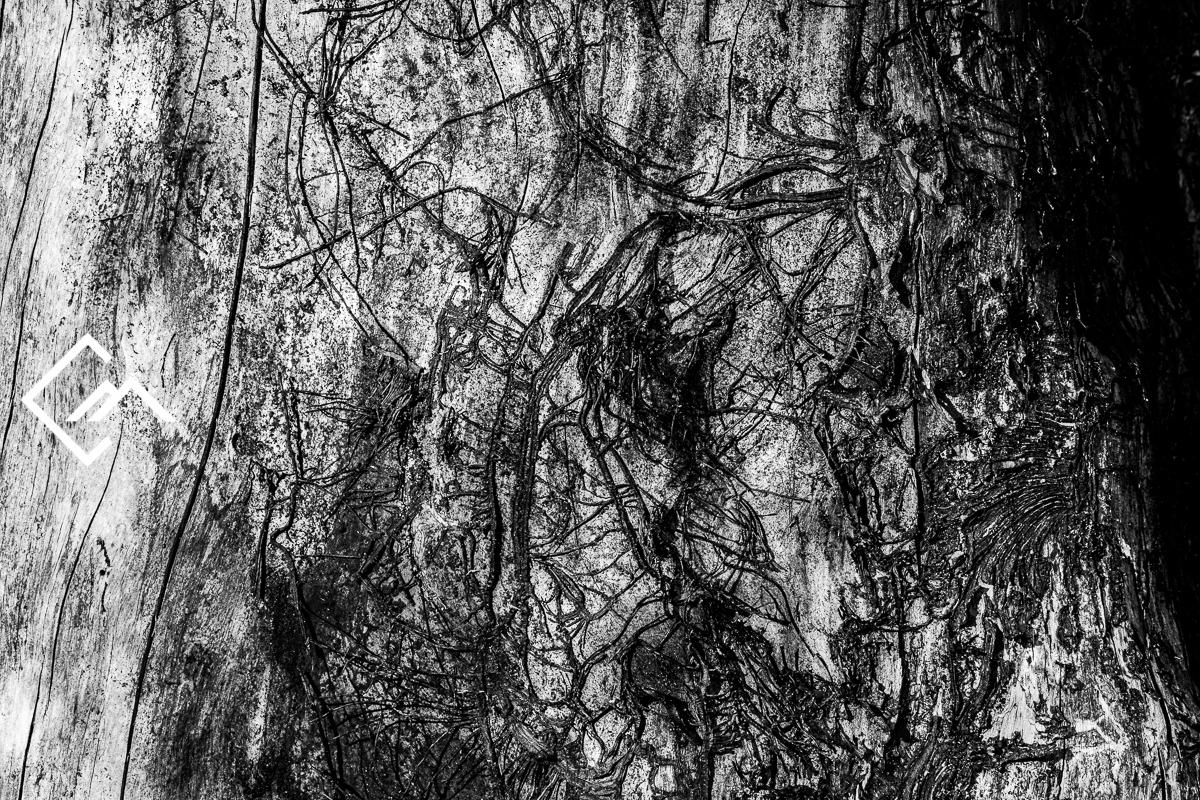 Wald_Vals_a7m3_190827_00035_web_©Markus