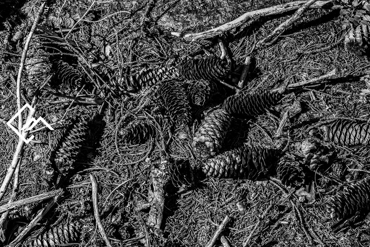 Wald_Vals_a7m3_190827_00037_web_©Markus