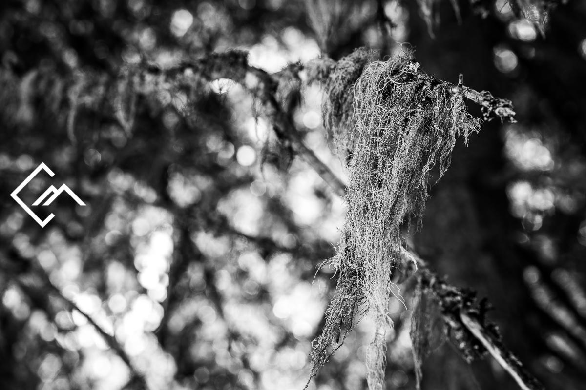Wald_Vals_a7m3_190827_00007_web_©Markus