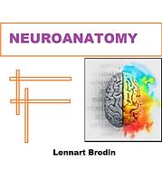 NEUROANATOMY Lennart Brodin.png