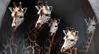 动物与数字:动物的数能力是天赋还是演化