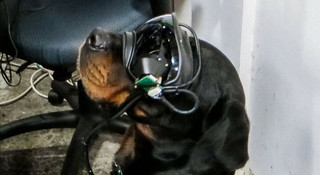 """AR为狗狗""""增强现实"""":美军研发军犬用穿戴式装置"""