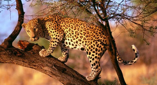 """动物世界中的""""生命走廊"""":拯救南非猎豹的大胆计划"""
