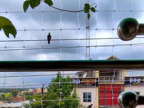 Pigeon Nets For Open Balconies