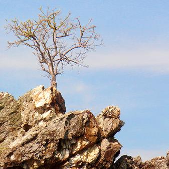¿Qué es la Resiliencia y cómo cultivarla?