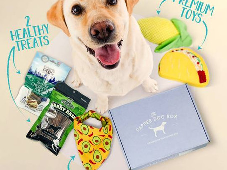 Pet Day Special: Discover the Best Monthly Pet Subscription Boxes loaded with Goodies