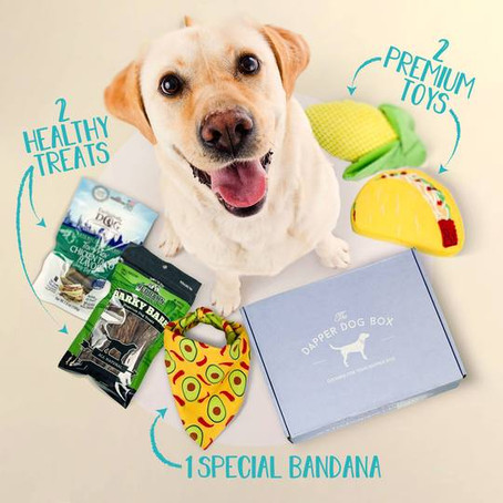 Pet Day Special: Discover Best Monthly Pet Subscription Box with Healthy Treats and Goodies