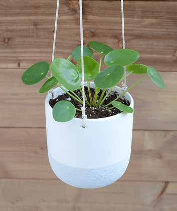 Pilea Peperomioide in Orion Hanging Pot