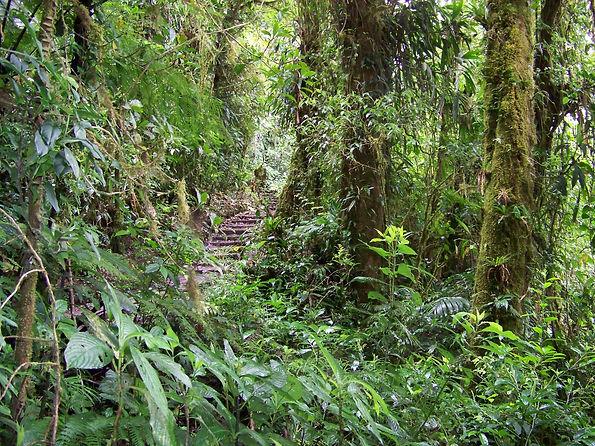 Costa Rica Rainforest picture