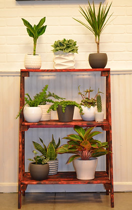 3 Tier Plant Stand by The Plant Gang