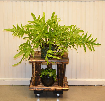 Plant Stand with Wheels - Natural, Stained, Colour or Shou Sugi Ban