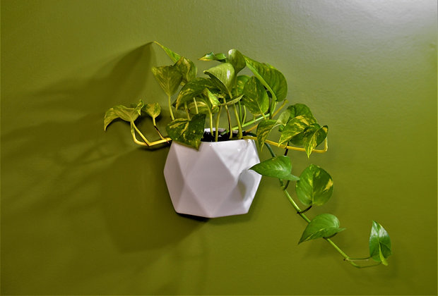 Golden Pothos in Cassiopeia Wall Planter