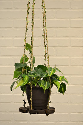 Monstera Leaf Hanging Plant Shelf With Leaf Rope