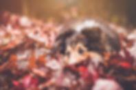 leaf-2598771_640.jpg