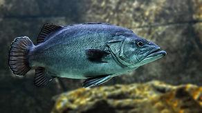fish-3322230_1920.jpg