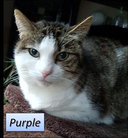 Purple_Schönsleben_-_Kopie.jpeg