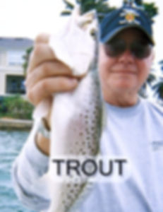 trout_edited_edited.jpg